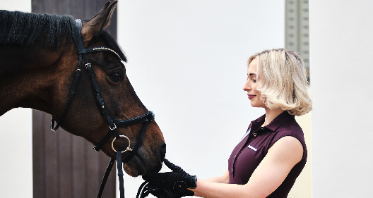 Cerci Equestrian image